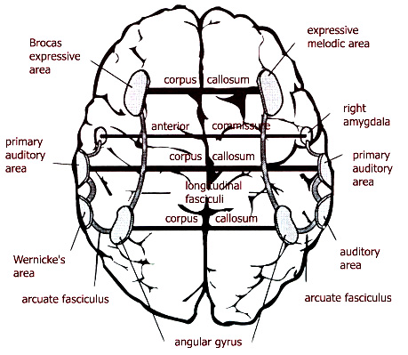 Interpretation Of Definite Expressions By Brain Damaged Patients