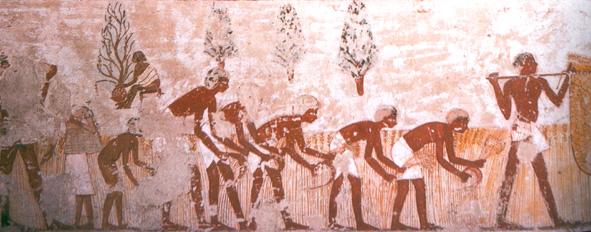 ANCIENT EGYPT : The Social Factor
